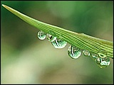 露珠与綠葉(二) 29 - [wall001.com]_dewdrops_GA076.jpg